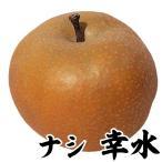 梨 苗木 幸水 1株 / ナシ なし 苗 梨の苗木 果樹苗 国華園