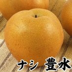 果樹苗 ナシ 豊水 1株 / 梨 なし 苗 苗木