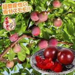 果樹苗 スモモ いくみP 富士野生桃R 1株