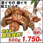 里いも種芋 桜海老イモ 500g