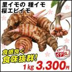 里いも種芋 桜海老イモ 1kg