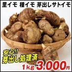 里芋 種芋 芽出しサトイモ(土垂れ系統選抜系) 1kg / さといも 里イモ 種いも タネイモ 家庭菜園 自給自足 球根 国華園