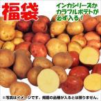 じゃがいも種芋 じゃがいも福袋(品種見計らい・名称付) 5種2.5kg(20球以上)