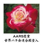 バラ ダブルデライト 1株 / 薔薇 ばら 苗