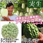 実生野菜苗 実生アップルゴーヤセット 3種3株(各1株)