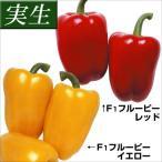 実生野菜苗 実生パプリカ2色セット 2種4株(各2株)