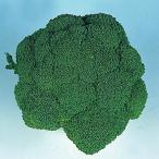 野菜たね ブロッコリー ブロッコリー 1袋(1ml) / タネ 種