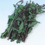 野菜たね 健康野菜 ツルムラサキ(緑茎) 1袋(4ml) / タネ 種