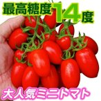 野菜たね トマト  F1豊産あま娘 1袋(10粒)