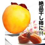 果樹苗 カキ 川端 1株