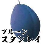 果樹苗 プルーン スタンレイ 1株