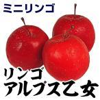 果樹苗 リンゴ アルプス乙女 1株 / 果物苗 フルーツ苗 林檎 りんご