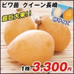 果樹苗 ビワ クイーン長崎 1株 / 果物 フルーツ苗 びわ 枇杷
