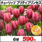 チューリップ プリティプリンセス 8球 バルブオブザイヤー グランプリ受賞花