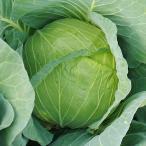 種 野菜たね キャベツ F1サトウくん 1袋(100粒) / カンラン 甘藍 野菜の種 国華園