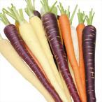 種 野菜たね ニンジン F1カラフル人参ミックス 1袋(ペレット種子100粒入)