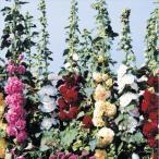 種 花たね タチアオイ 八重混合 1袋(300mg)