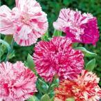 種 花たね カーネーション ピコティーファンタジー 1袋(200mg)