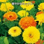 花たね キンセンカ パシフィック混合 1袋(300mg)