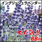 花たね イングリッシュラベンダー 1袋(150mg)