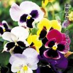 種 花たね パンジー ベルベットミックス 1袋(60mg)