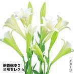 ショッピング花 花たね 切花向き 新鉄砲ユリ 2号セレクト 1袋(20粒)
