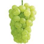 果樹苗 ブドウ 瀬戸ジャイアンツ 1株