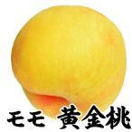 桃 苗木 黄金桃 1株 / モモ もも ピーチ 苗 モモの木 果樹苗 国華園