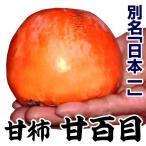 果樹苗 甘柿 甘百目(完全甘柿) 1株