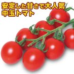 野菜たね トマト F1新中玉トマト 1袋(0.5ml) / タネ 種