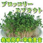 野菜たね 菜類 ブロッコリー スプラウト 1袋(50ml)