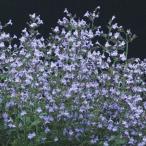 花たね カラミンサ マルベレットブルー 1袋(30粒)