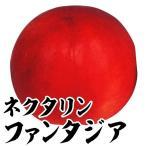 果樹苗 ネクタリン ファンタジア 1株