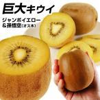 果樹苗 キウイ ジャンボイエロー&孫悟空(黄肉用オス木) 2種2株 / 果物苗 フルーツ苗