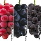 果樹苗 注目度MAXブドウセット 3種3株