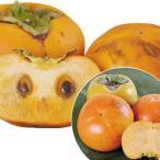 果樹苗 超人気の甘柿セット 2種2株