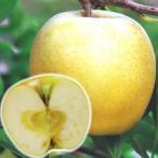 果樹苗 リンゴ ぐんま名月 1株