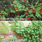 有用植物苗 山椒セット 2種2株
