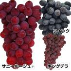 果樹苗 育てやすいブドウセット 3種3株