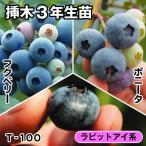 果樹苗 ブルーベリー 大粒ラビットアイ系セット 3種3株