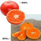 果樹苗 新しいカンキツセット 2種2株