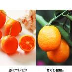 果樹苗 珍しいカンキツセット 2種2株