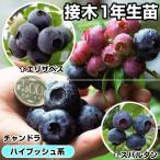 果樹苗 ハイブッシュ系ブルーベリーセット 3種3株