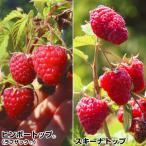 果樹苗 キイチゴ 美味ラズベリーセット 2種2株