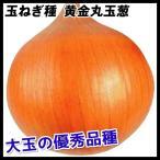 野菜たね タマネギ 黄金丸玉葱 1袋(5ml入)