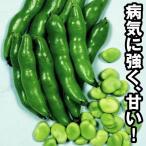 種 野菜たね ソラマメ 陵西一寸 1袋(50ml入)/タネ たね まめ 豆