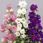 種 花たね つりがね草 カップ&ソーサーミックス 1袋(50mg)
