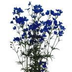 花たね デルフィニウム ファッションブルー 1袋(20粒)