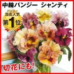 花たね 中輪パンジー シャンティ 1袋(20粒)