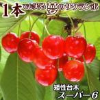 果樹苗 サクランボ 紅きらりPスーパー6(コルトシックスR) 1株